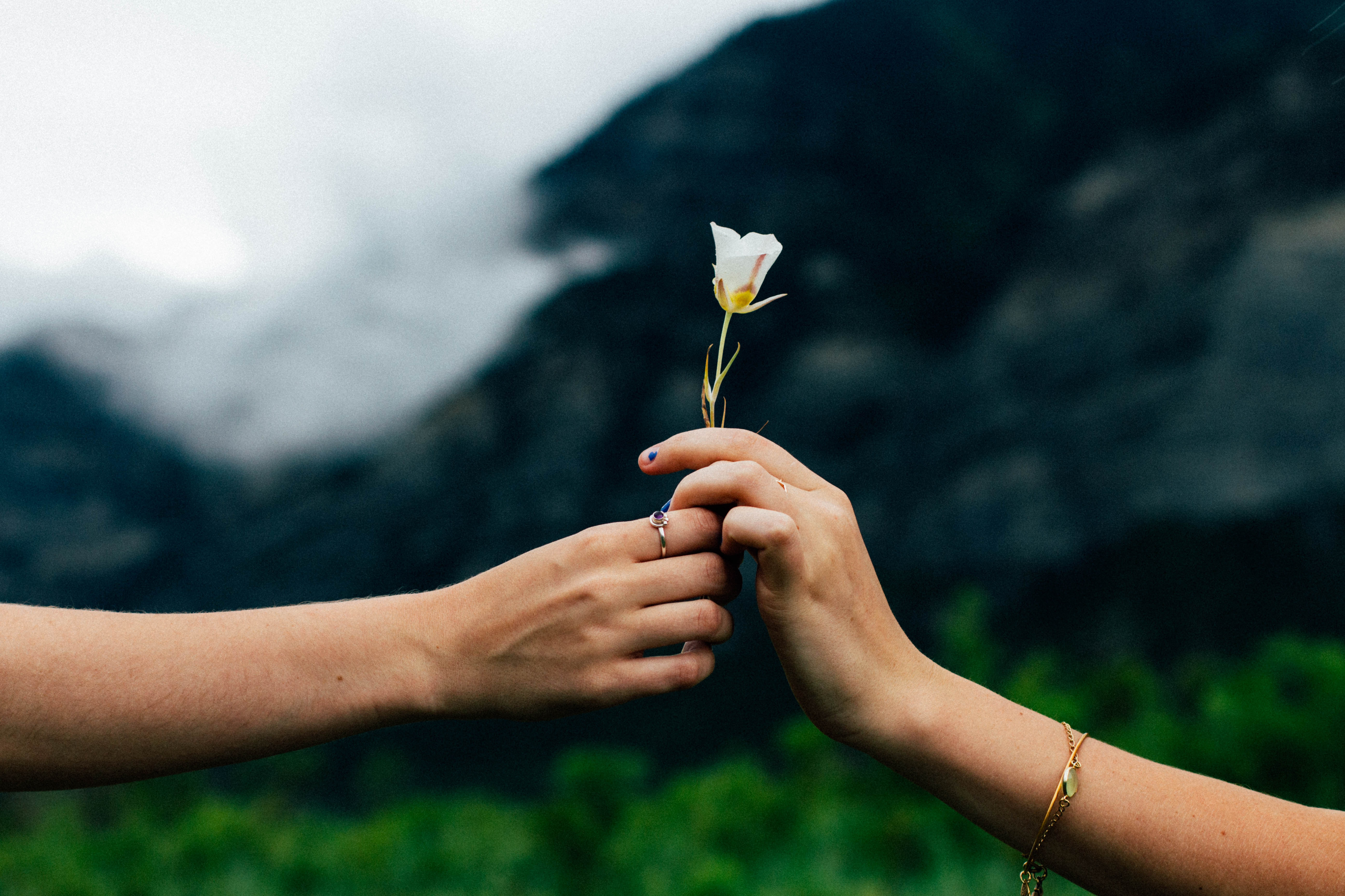One hand giving a flower to another