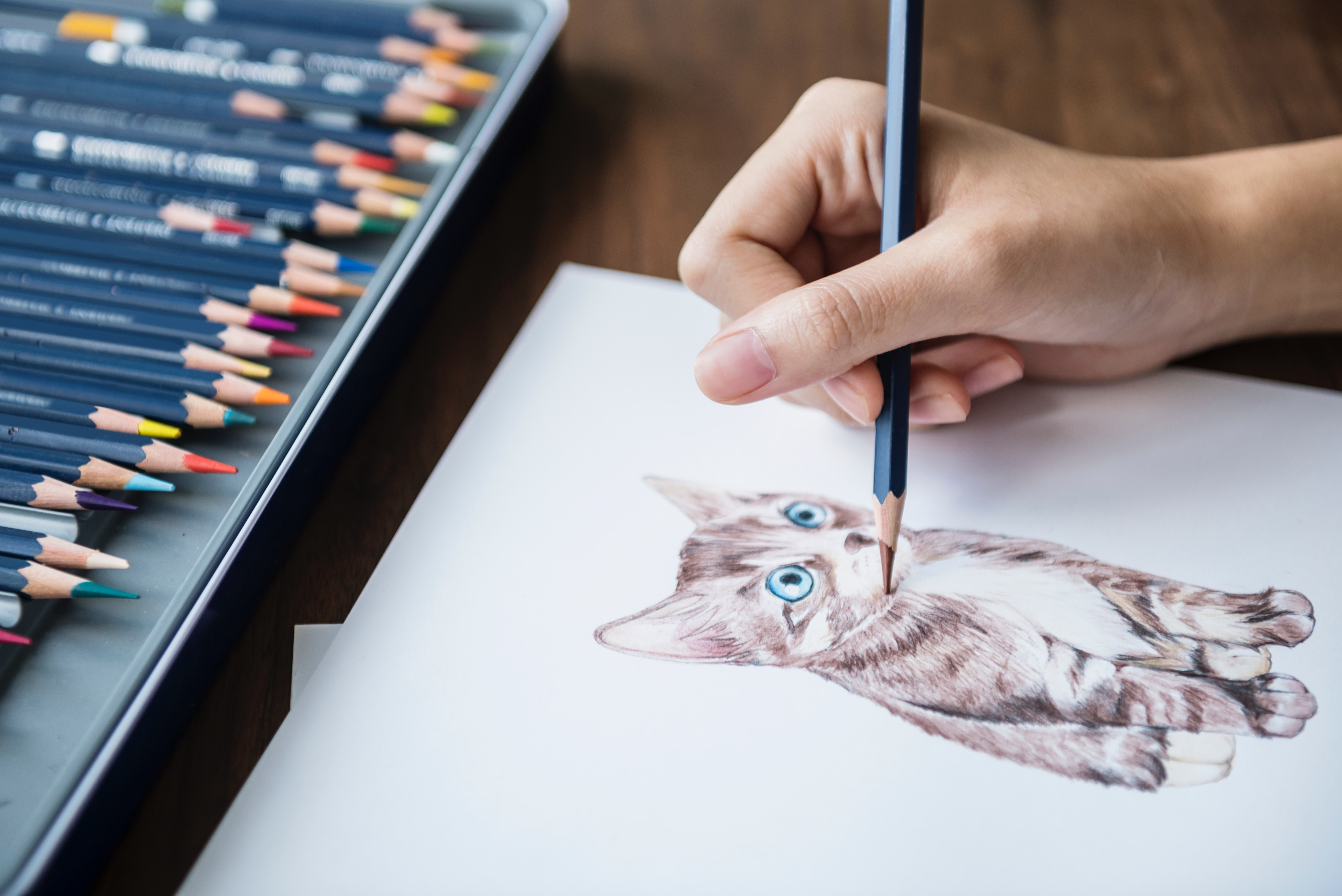 person drawing a kitten