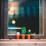 succulents on a windowsill