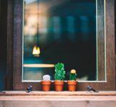 succulents on a windowsill