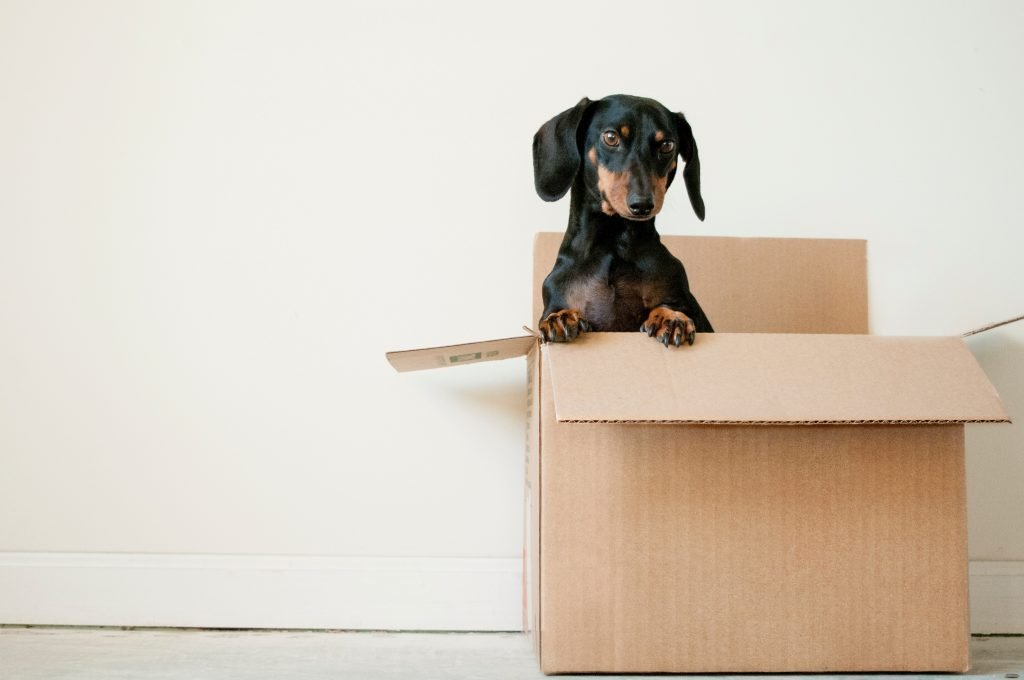 Moving abroad with pets can be intimidating, but following a moving guide will help you!